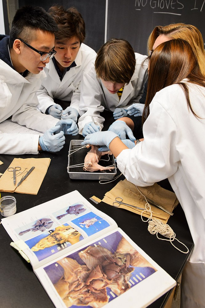 classroom pass surveys dissection in biology lab