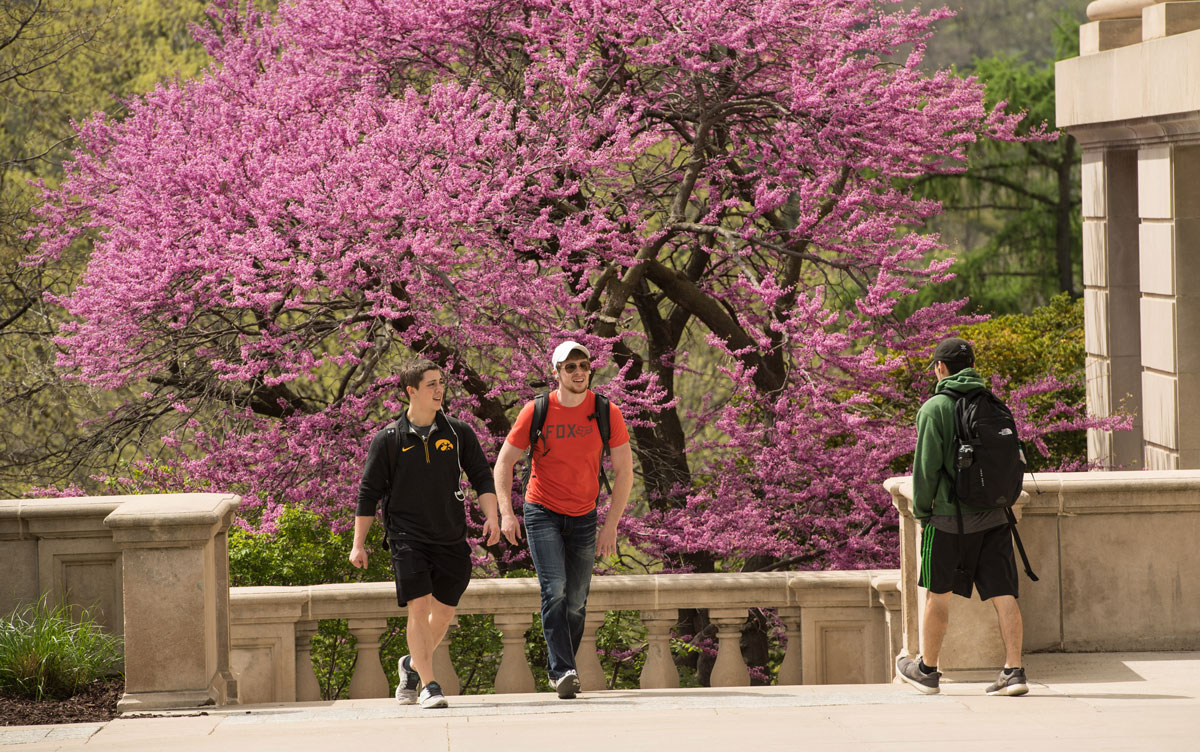 students walking on campus with blooming redbud tree behind them