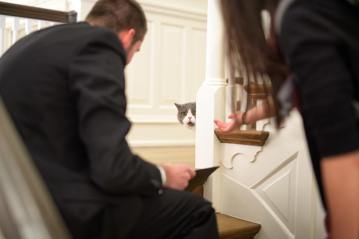 Cat on stairwell peeking around landing