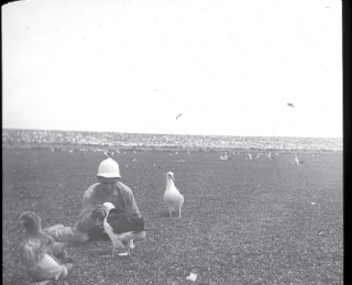 A man kneeling down to feed an albatross.