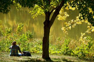 Color photo of a student sitting under a tree by the Iowa River