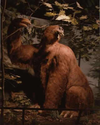 A stuff giant sloth