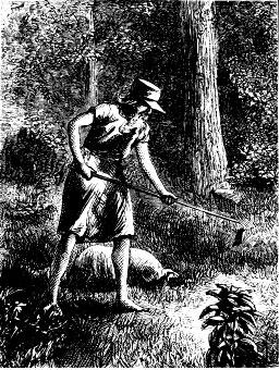 sketch of Johnny Appleseed