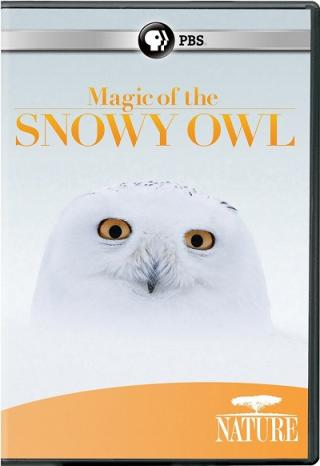 A photo of the head of a snowy owl with the words Magic of the Snowy Owl above it