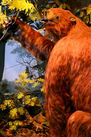Color photo of Rusy the giant (stuffed) sloth, who resides in the UI Museum of Natural History