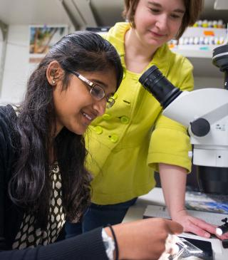 Sweta Sudhir is working with fruit fly ovaries.