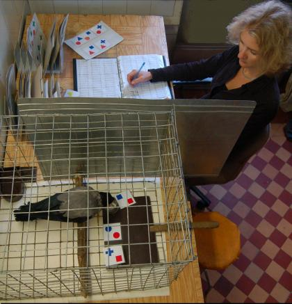 Researcher takes notes during crow study.