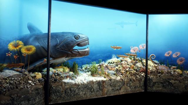 Photo of exhibit of prehistoric fish in the University of Iowa Museum of Natural History