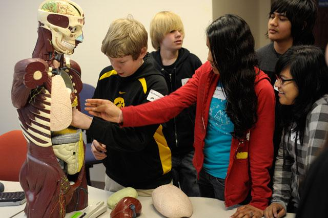 students look at a human muscle skeleton model