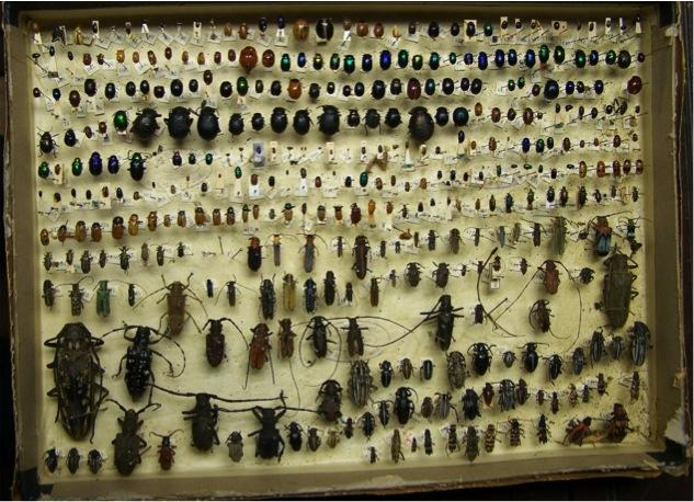 Insects in a museum storage box