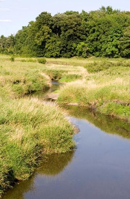 stream in pasture land