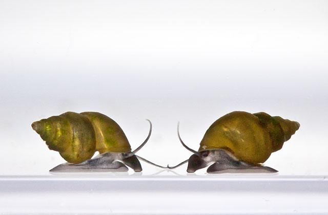 two snails