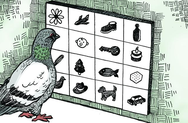 Illustration of a pigeon looking at a grid of symbols