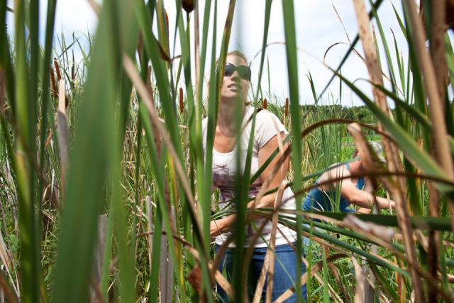 woman and man gathering cattails