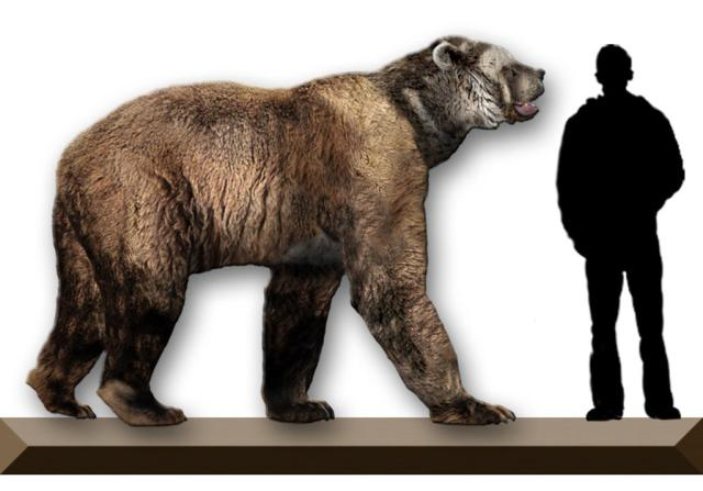 A giant short-faced bear shown next to a human silhouette to illustrate size relationship