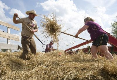 Horse-powered threshing demonstration at the Old Threshers Reunion