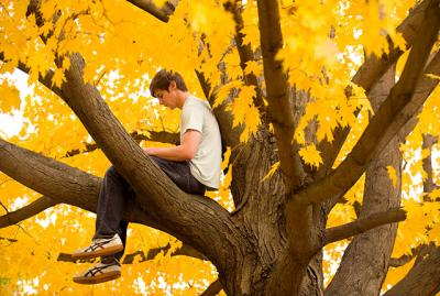 A student studies in a tree.