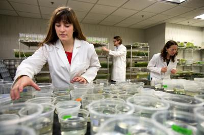 Associate Professor of Biology Maurine Neiman works with Graduate Teaching assistant Joe Jalinsky and incoming Freshman Kaitlin Hatcher of Solon, IA in the Snail Research Lab
