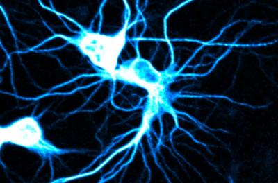 Mouse neuron