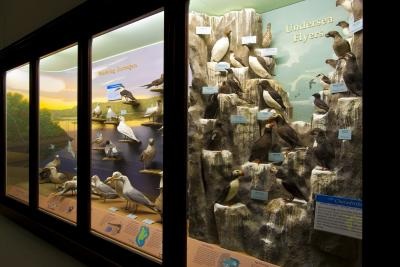 A photograph of a museum display of birds