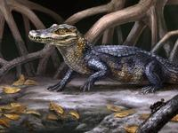 Ancient gator. The discovery of the skull of a new crocodilian ancestor, Culebrasuchus mesoamericanus, depicted here by an artist, gives researchers information on how caimans evolved from alligators. Credit: Original Artwork by Danielle Byerley © Florid