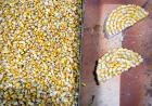 corn decorations for parade float