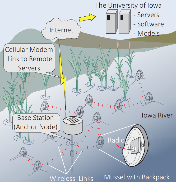 Wireless sensor network of cybermussels